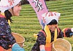 海田のお茶